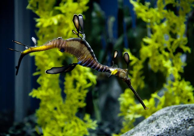 Sea Dragon 2
