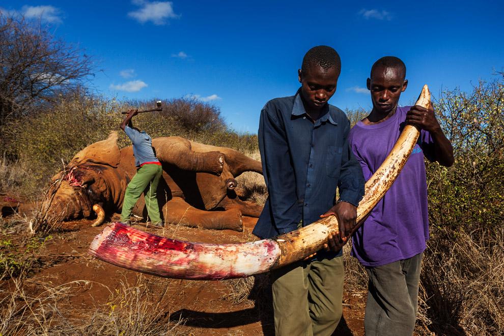 Победители конкурса фотографий дикой природы 2013
