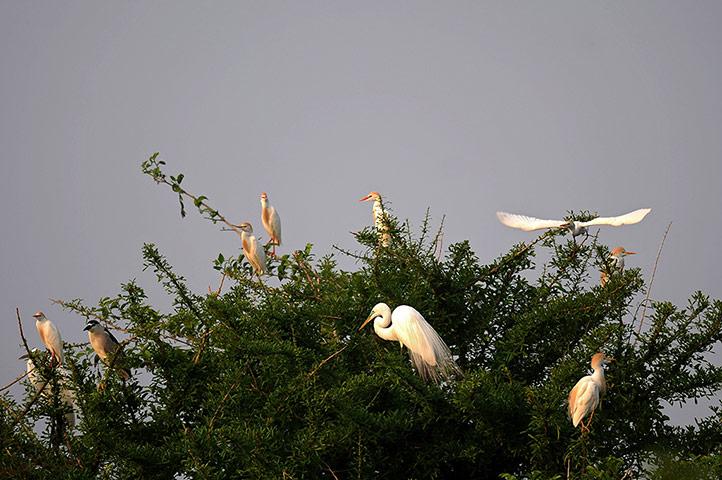 Неделя в дикой природе - в фотографиях