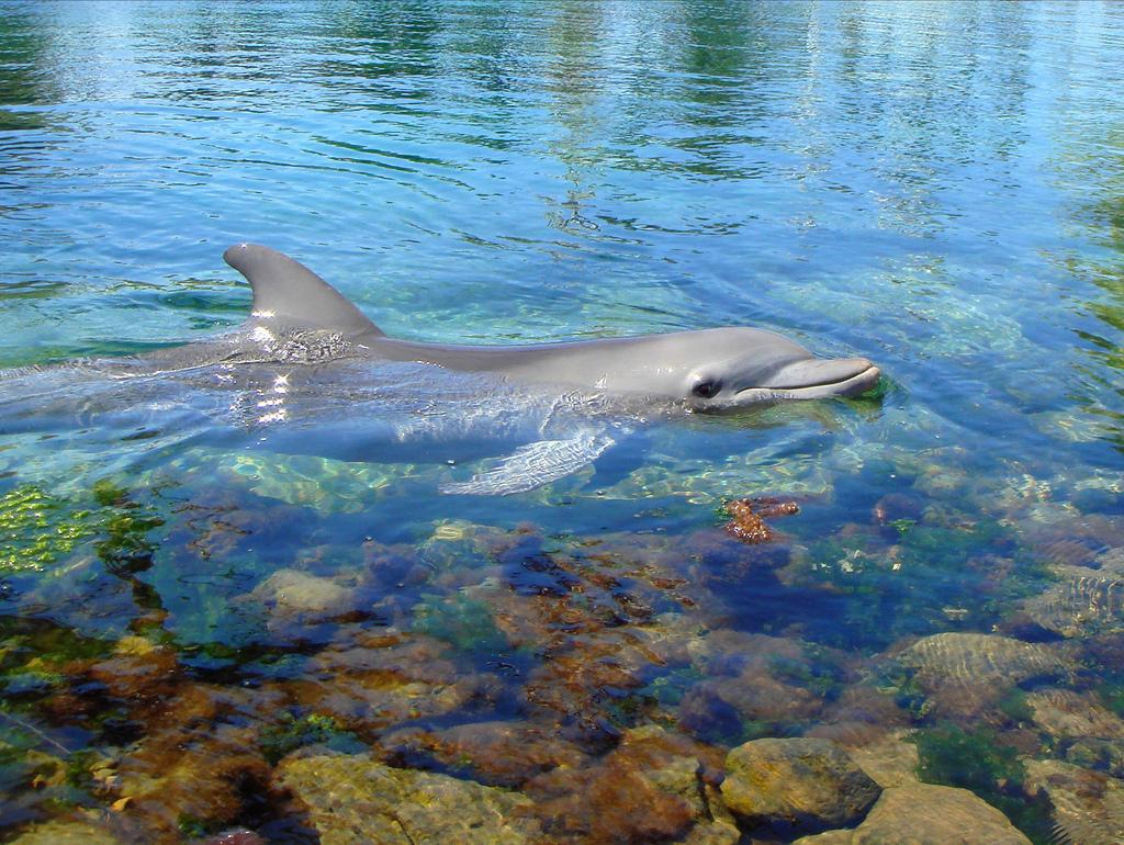 Дельфин..