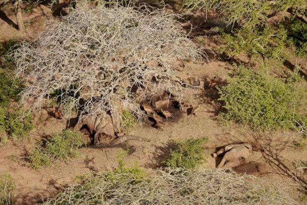 Мертвые слоны