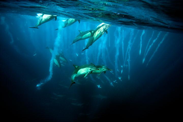 Sardine Attack