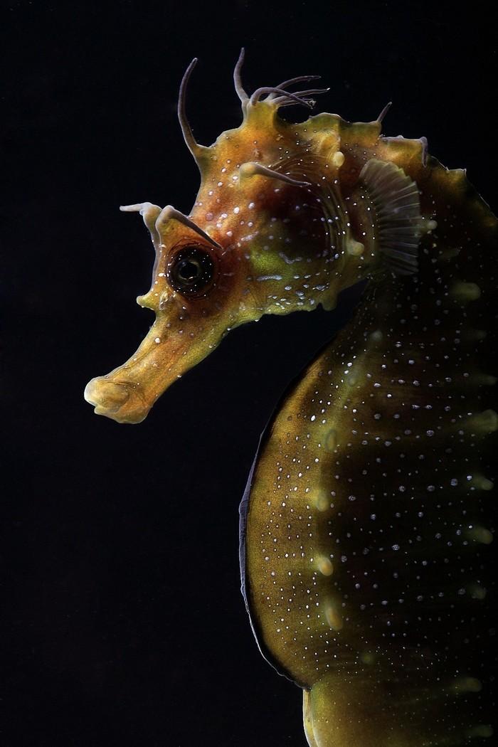 Underwaterftgrfr01