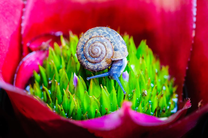 Macro shot of a snail on an colorful exotic plant