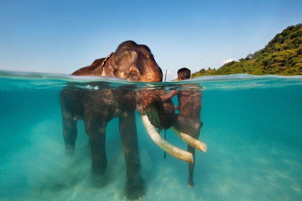 Андаманские острова, Индия. Морская прогулка со слоном