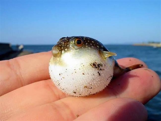 Ну ты же рыба!