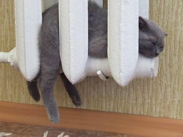 кошка7