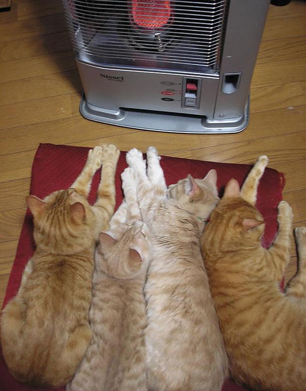 кошки2