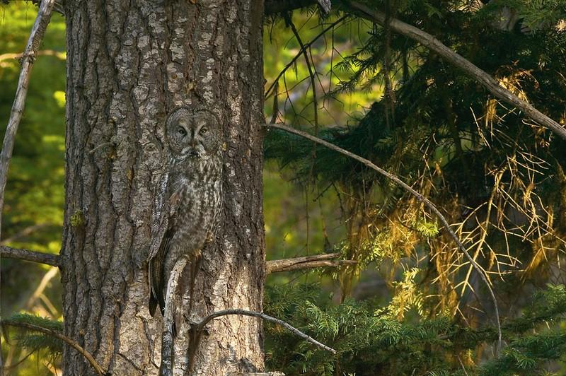 owls88