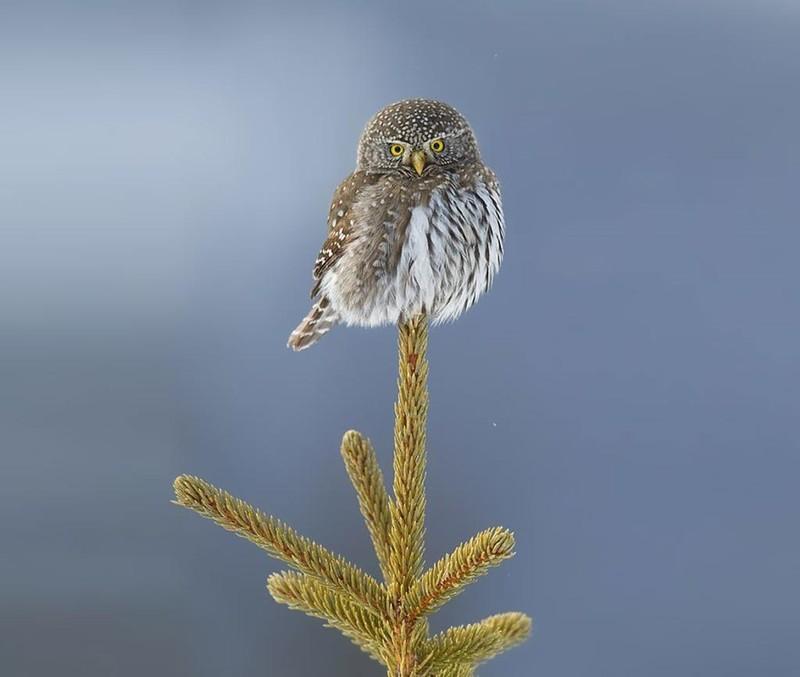 owls92