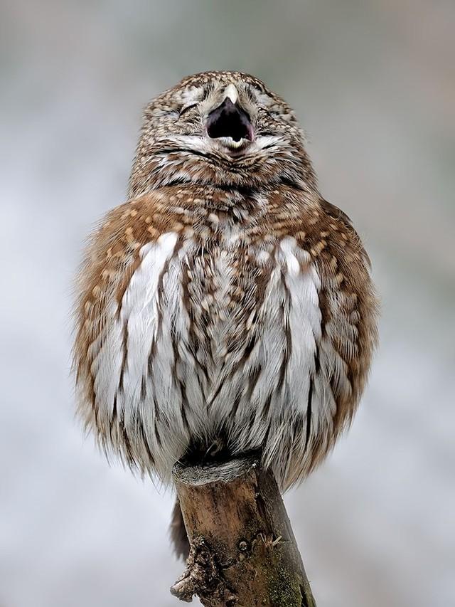 owls95