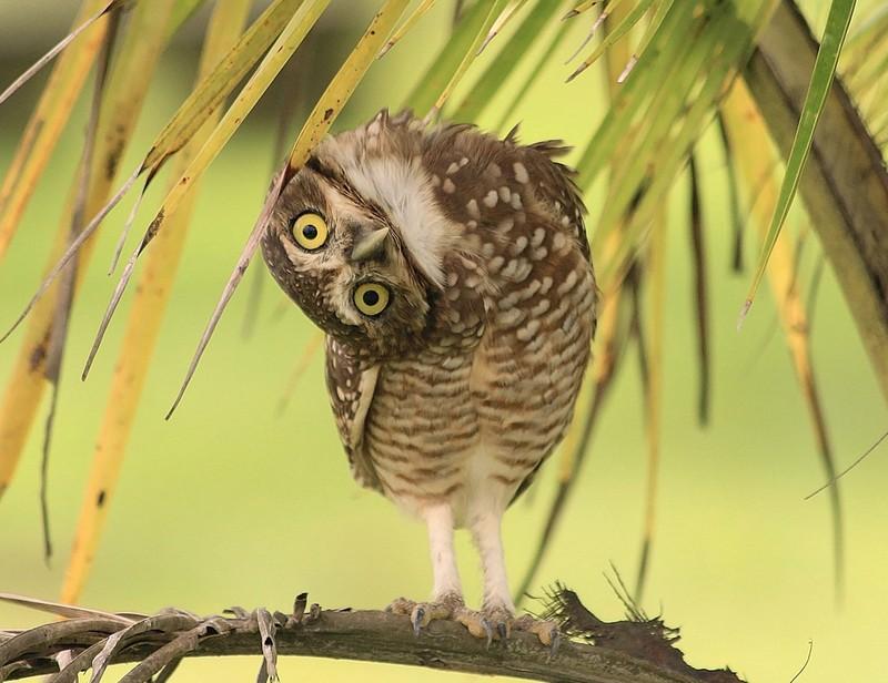 owls98