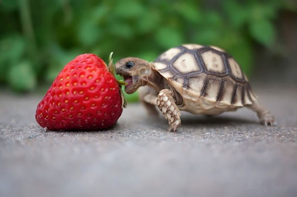 animals-eating-berries-31__605