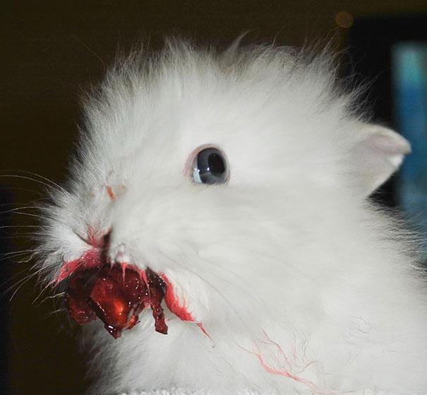 animals-eating-berries-61__605