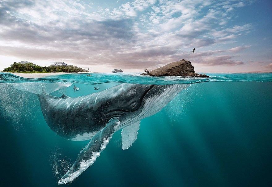 animals-landscapes-digital-art-all-you-need-is-ecuador-tourism-board-manipula-4