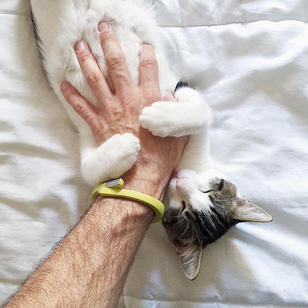 belly-rub-animals-3__605