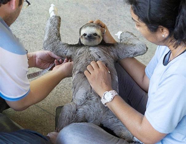 cute-animals-belly-scratch-rub-3__605