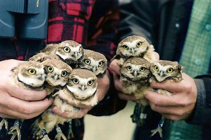 owls01