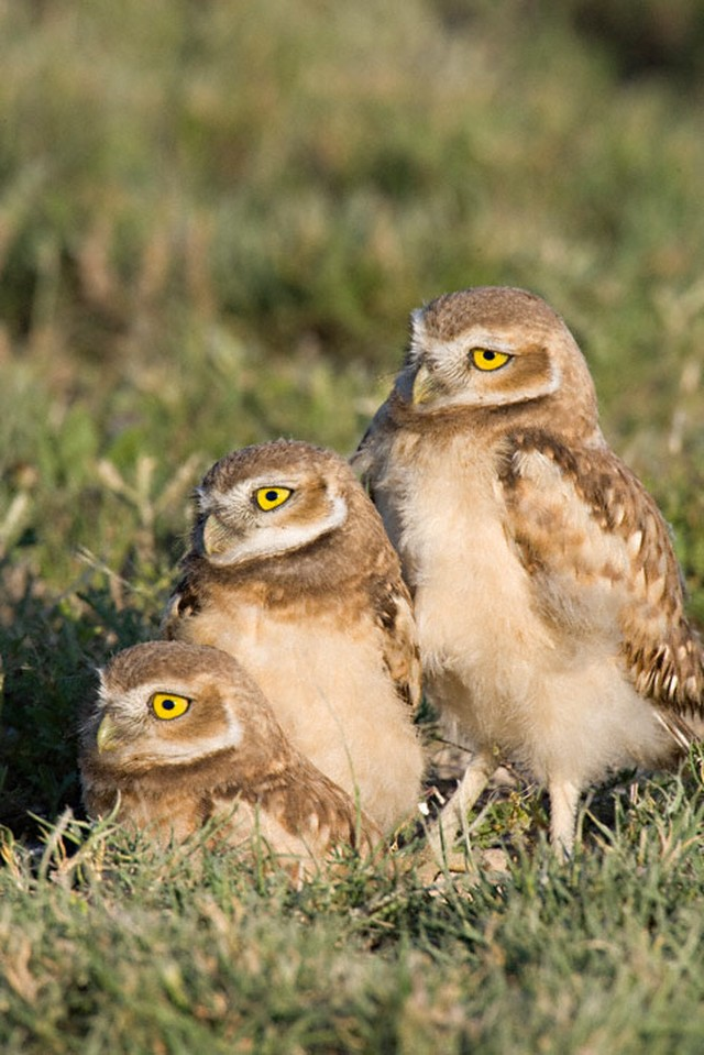 owls06