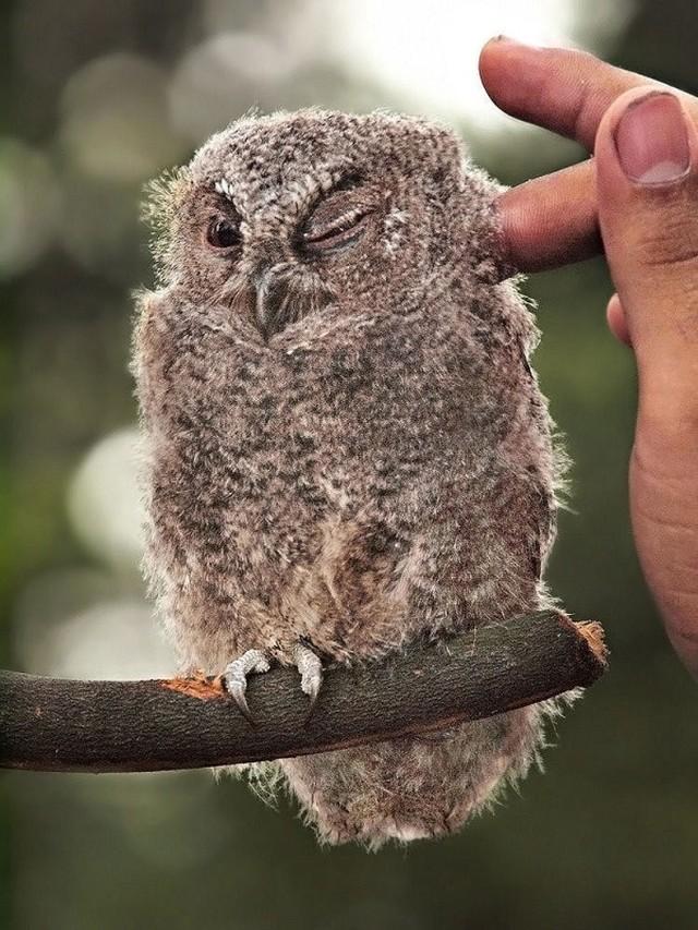 owls07