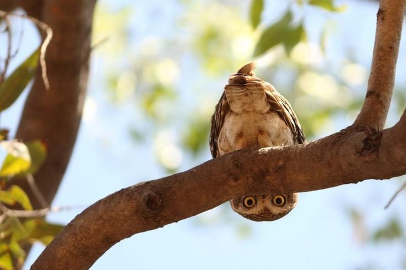 owls09