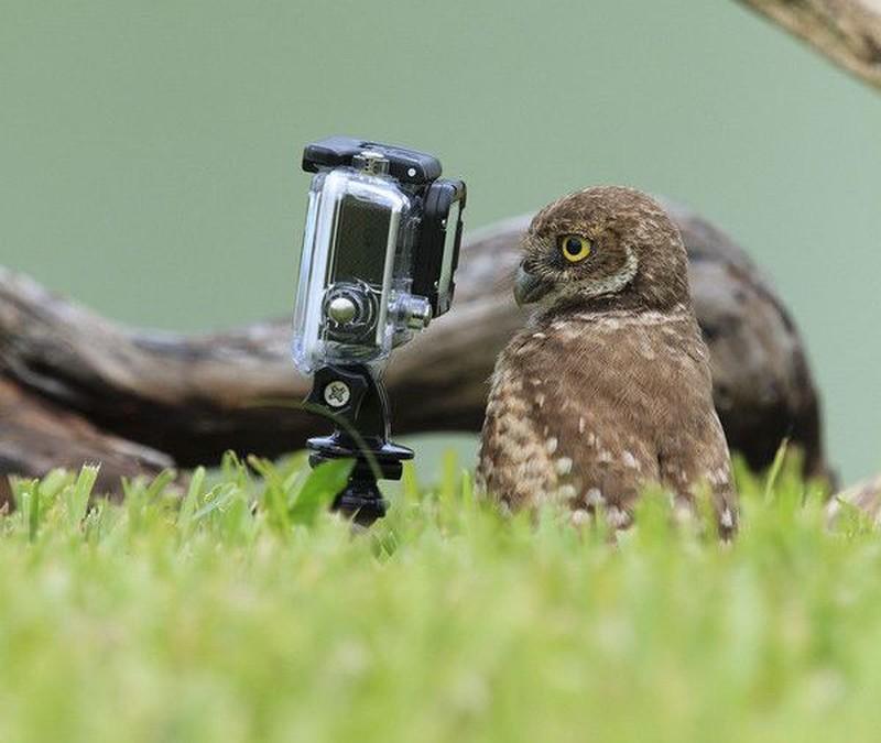 owls12