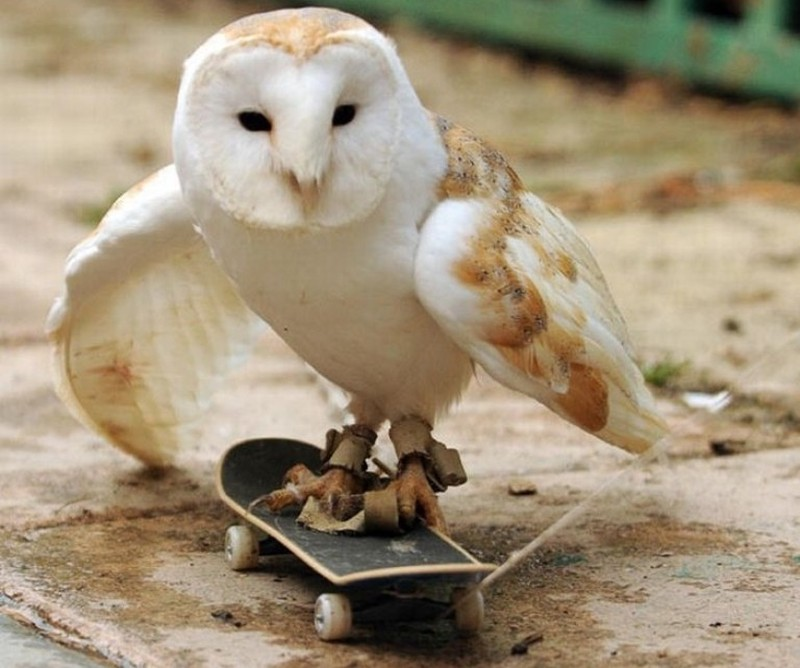 owls17
