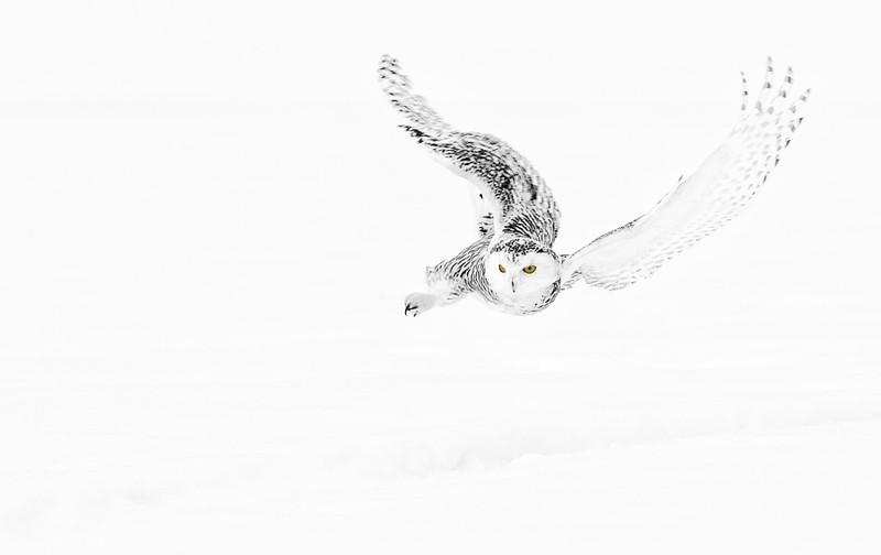 owls18