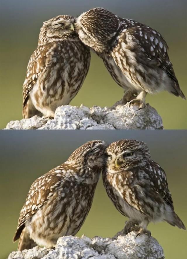 owls19