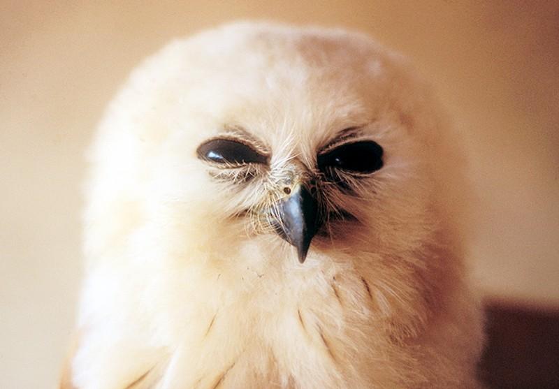 owls20