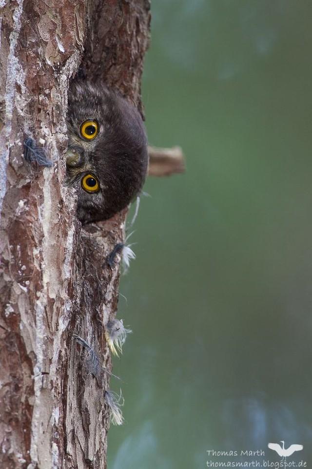 owls22