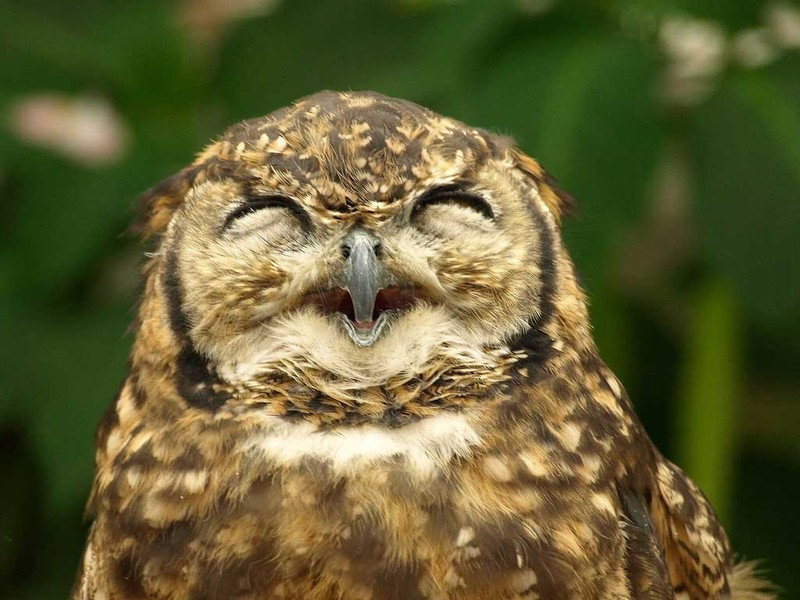 owls24