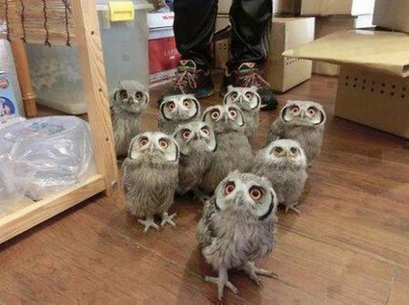 owls25