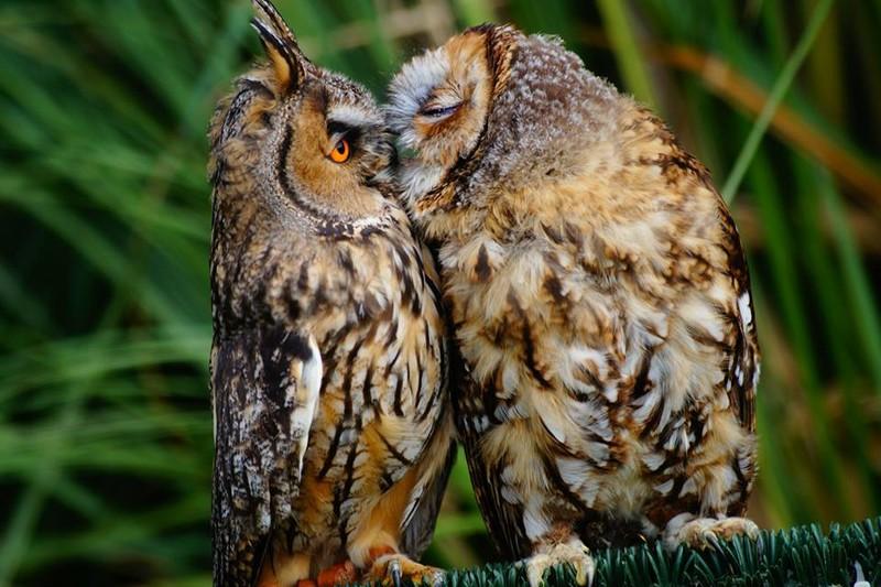 owls26