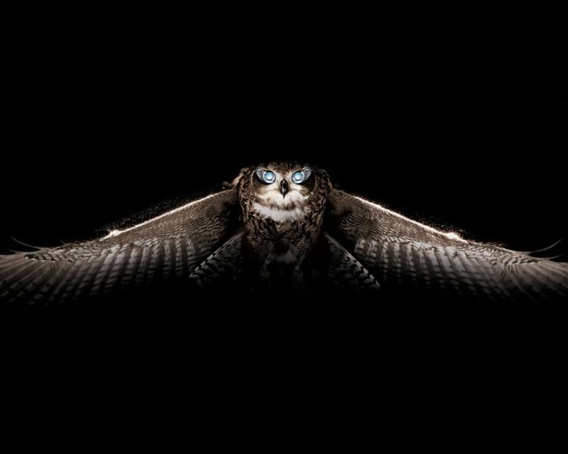 owls35
