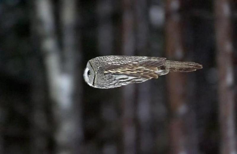 owls46