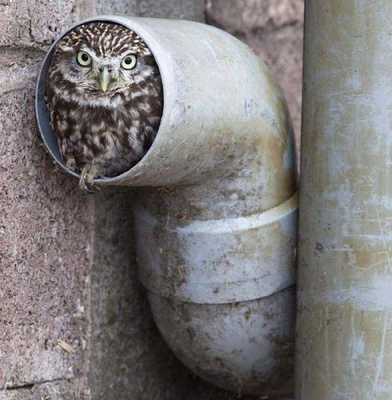 owls47