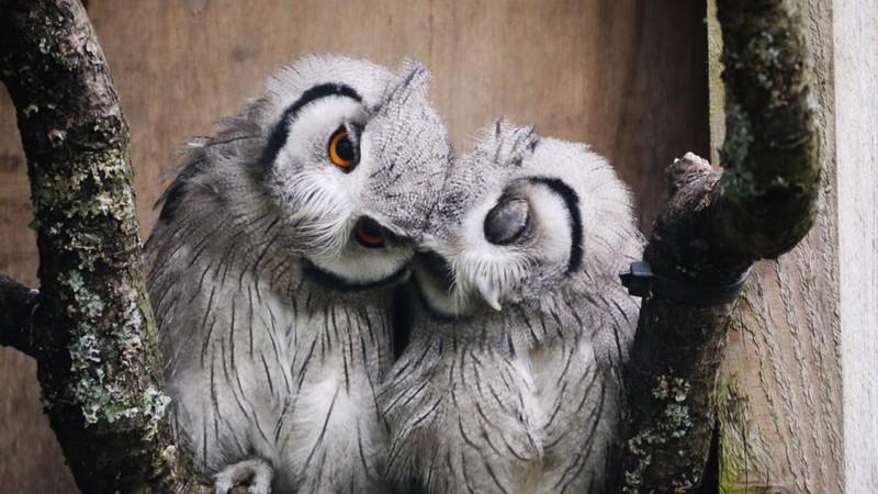 owls48