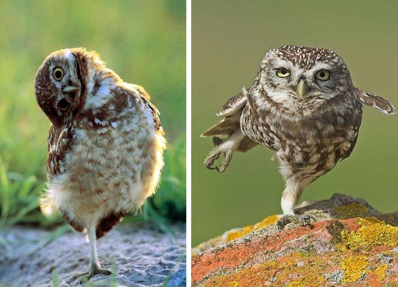 owls49