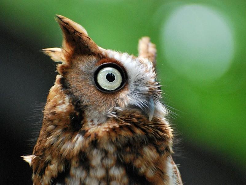 owls51