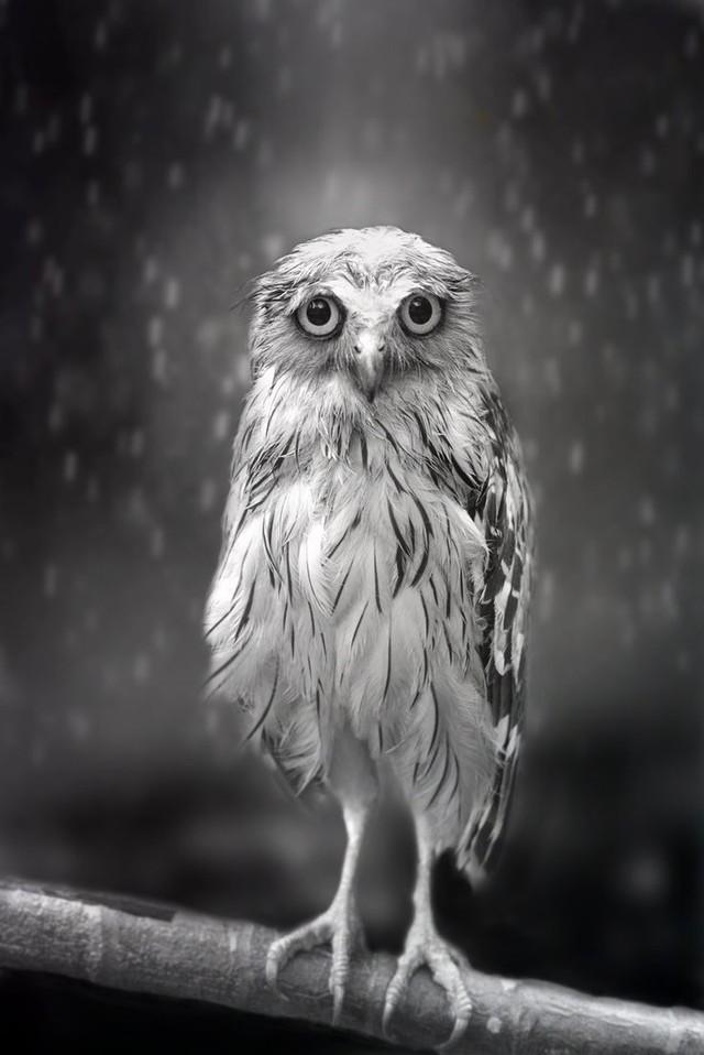 owls53
