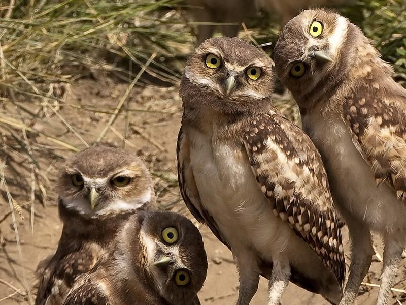 owls56