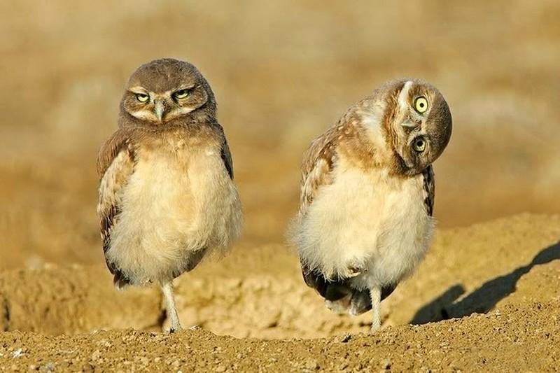 owls57
