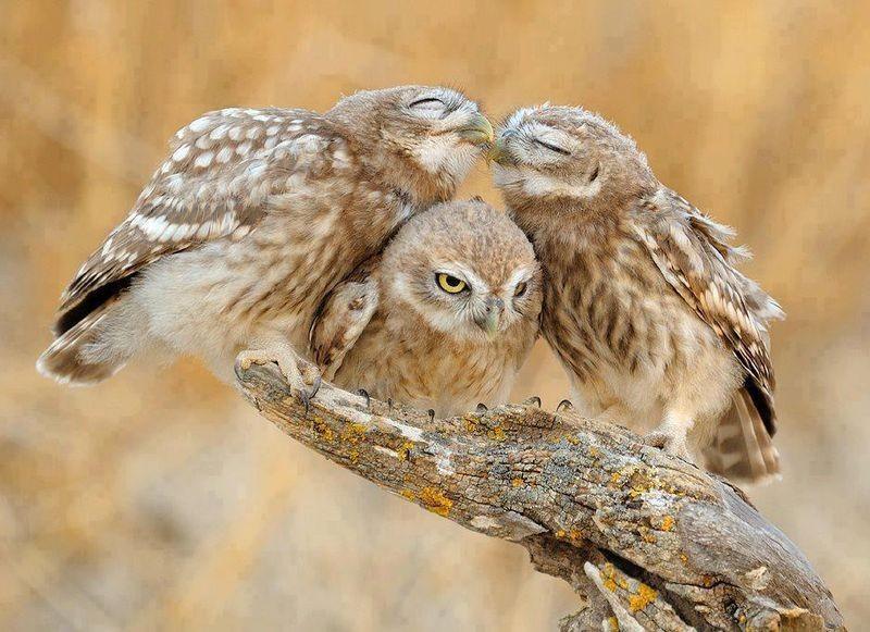 owls59