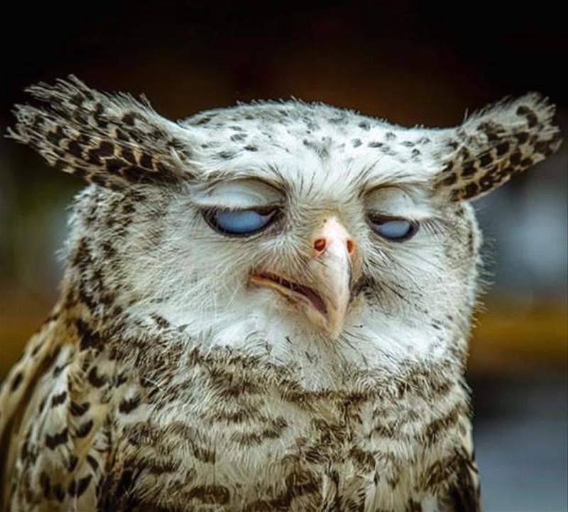 owls63
