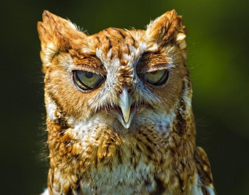 owls68
