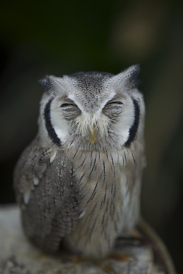 owls71