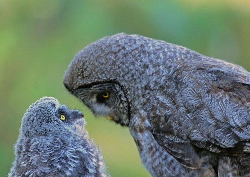 owls73