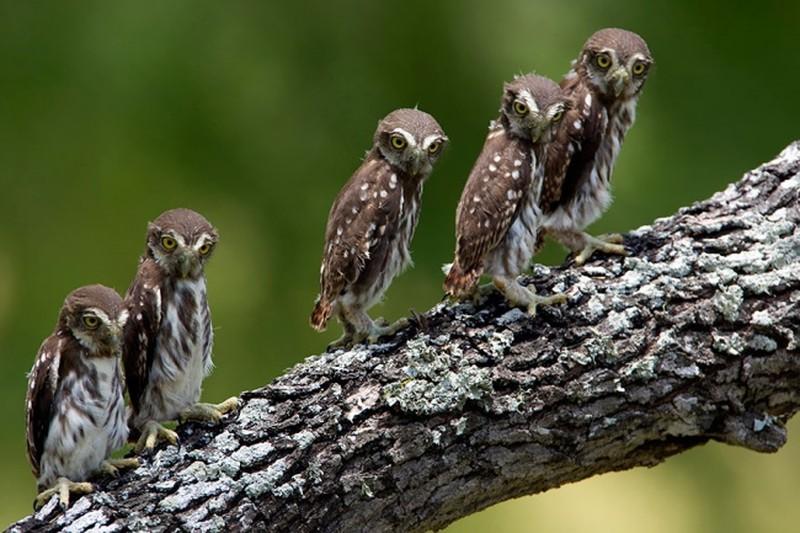 owls74
