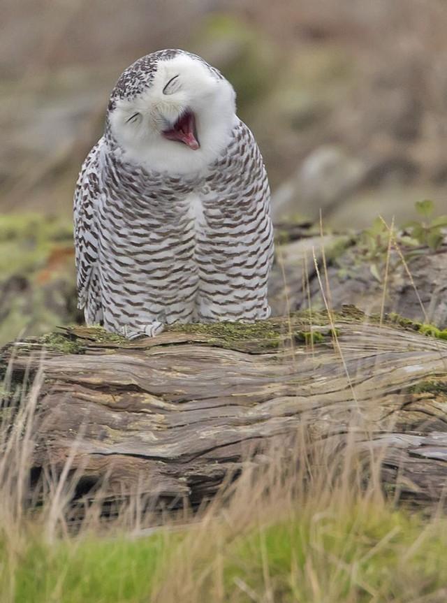 owls79